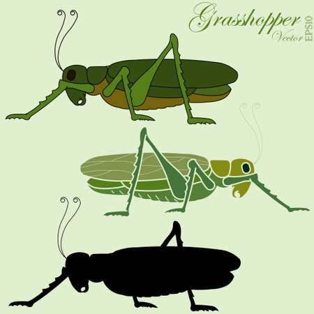 cricket insect: grasshopper, green jumper insect, silhouette side view - vector illustration
