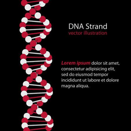 deoxyribonucleic acid: DNA Strand - Deoxyribonucleic acid - genetic code - vector illustration Illustration