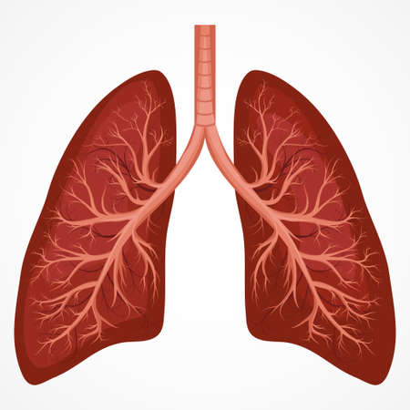Human Lung anatomy diagram.  Illness respiratory cancer graphics. Vector Vettoriali