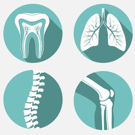 columna vertebral: etiquetas médicos fijados, insignias de la clínica de diagnóstico, elementos de diseño sanitario.