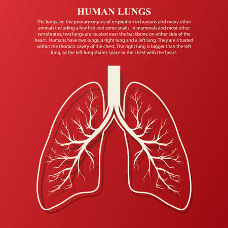 aparato respiratorio: ilustración de la anatomía humana de pulmón con texto de ejemplo. Enfermedad respiratoria gráficos cáncer.