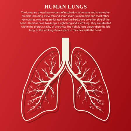 Menselijke long anatomie illustratie met voorbeeld tekst. Ziekte van de luchtwegen kanker graphics. Stock Illustratie