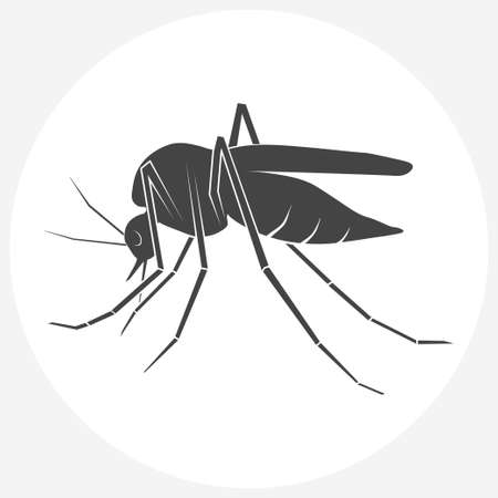 Mosquito silhouette. Insect Mosquito isolated on white background.