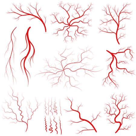 Vein set, Human vessel, blood arteries, eye veins silhouette, health red artery system. Vector