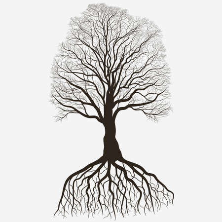 Tree with root system Silhouette isolated on white background, Black brown oak outline. Detailed image. Vector