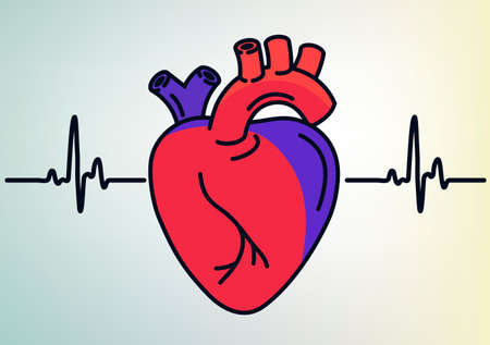 Human Heart organ outline icon. Anatomy symbol, Cardiology linear style sign. Heart line art. Vector graphics