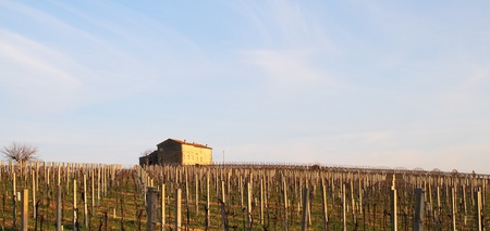 isolated house in the Italian countryside with grape vines Stock Photo