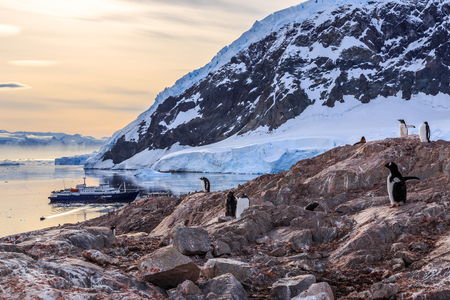bakground: Gentoo penguins gathered on the rocky shore of Neco bay and cruise ship int the bakground, Antarctica