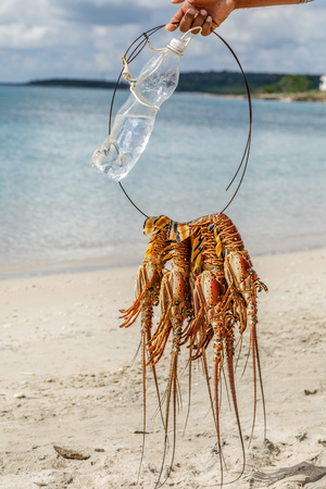 Several freshly caught big caribbean langustas or spiny lobsters tied together to be cooked on Luna beach, Cienfuegos, Cuba