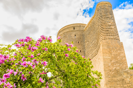 Gız Galası or medieval maiden tower with blooming tree in the foreground, old town, Baku, Azerbaijan 免版税图像