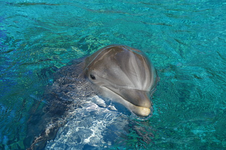 peekaboo: Peek-a-boo Dolphin