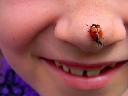 nose: Lady Bug Nose Stock Photo