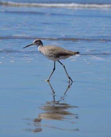on shore: Shore Bird