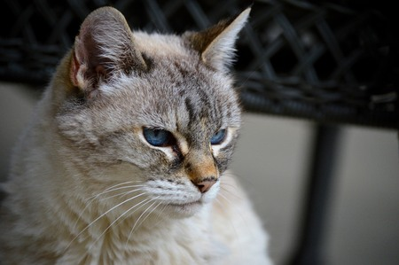 grumpy: Grumpy Cat