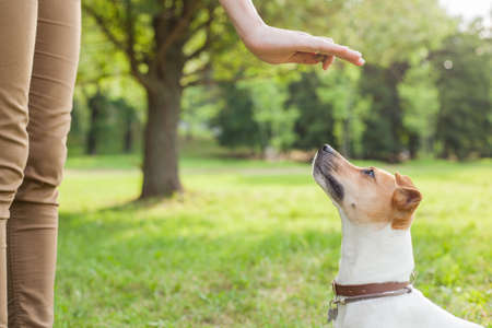 A man gives commands to a breed dog jack russel terrier which sits on the green grass in the park Imagens