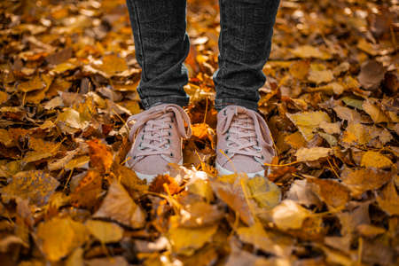 Legs in jeans and pink sneakers are on fallen yellow leaves in the park.