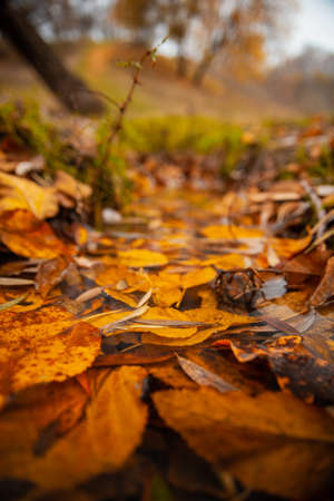 Yellow fallen leaves in the water in autumn in the park Stockfoto