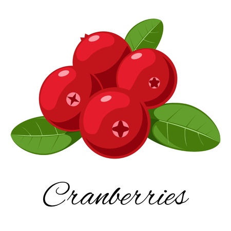 Cranberries isolated icon. Vector illustration
