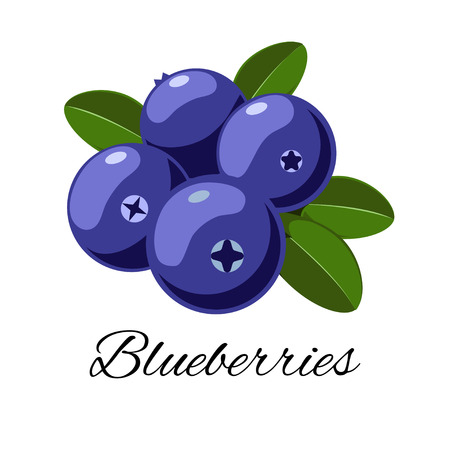 Vector cartoon blueberries with leaves. Isolated on white background. Icon for your design. for pattern, badge, label, textile etc