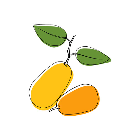 Vector vintage style hand drawn kumquat fruits. Isolated color design elements. Good for cards, invitations, gift wrap, print, scrapbooking, kitchen theme, menu, textile.