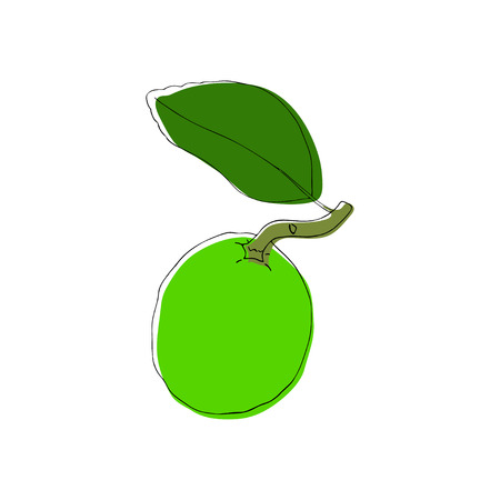Hand drawn decorative lime fruits, design elements. Citrus. Can be used for cards, invitations, gift wrap, print, scrapbooking. Kitchen theme. Sketch Isolated