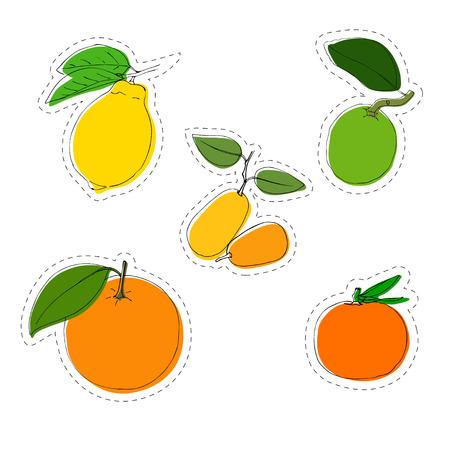 Vector color sticker set of citrus. Lemon, orange, mandarin, lime kumquat. In vintage style