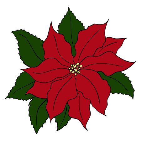 Hand drawn poinsettia flowers, in red and green colors Ilustração