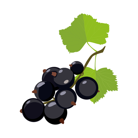 Black currant. Vector icon in cartoon style. Isolated on white background