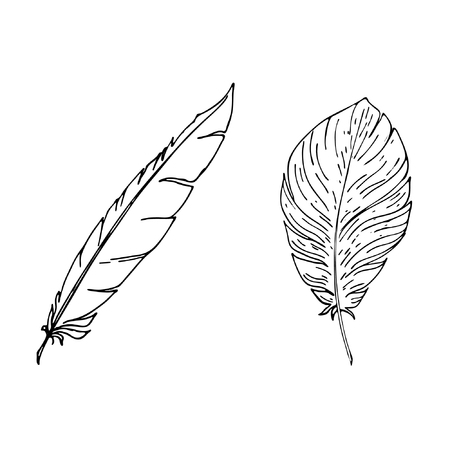 Vector hand drawn in line art style feather