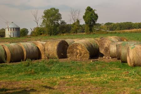 hay bales: row of hay bales