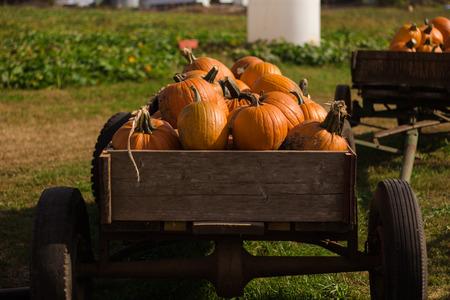 carreta madera: large pumpkins in a wooden wagon