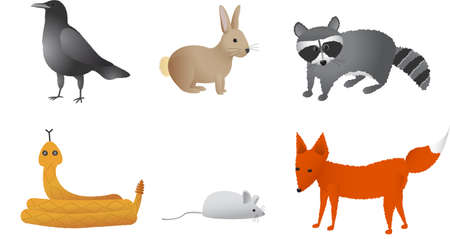 Prairie dieren waaronder kraai, konijn, wasbeer, rammelaar slang, veld muis en vos.
