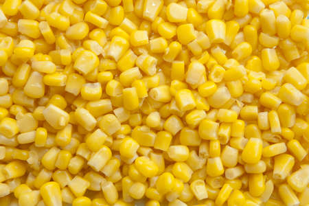 corn kernel: Corn Kernel Close Up