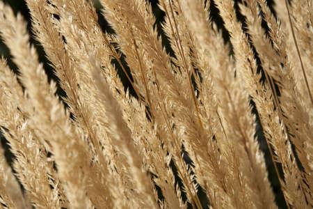 野草: 黒の背景の野草