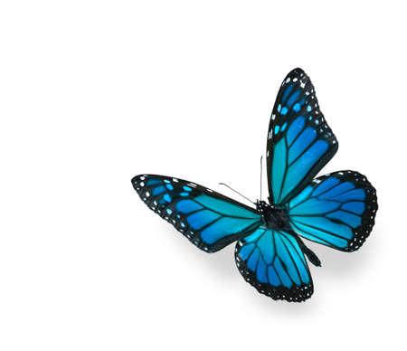 白で隔離される緑の青の蝶