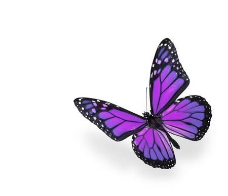 白の背景に紫とピンクの蝶