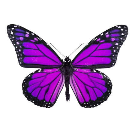 モナーク蝶の白で隔離されます。ソフト shadown undernath。 写真素材