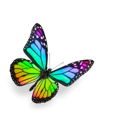 purple butterfly: Rainbow Butterfly Isolated on White Stock Photo