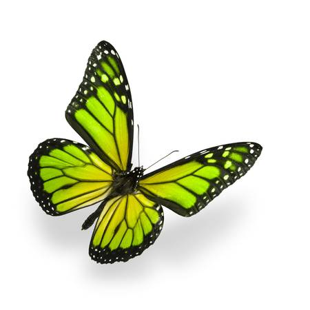 Green color enhanced butterfly Isolated on White. Soft shadown undernath.