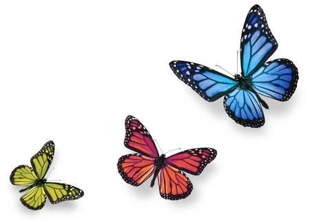 それぞれの下に柔らかい影を白で隔離される緑ピンクと青の蝶 写真素材