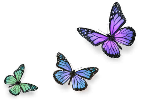 Green pink and blue butterflies isolated on white with soft shadow beneath each Stockfoto