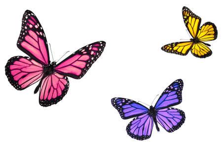 mariposas amarillas: Aislado de las mariposas monarca en blanco volando hacia el centro del marco Foto de archivo