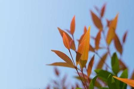 softness: Spring softness of nature Stock Photo