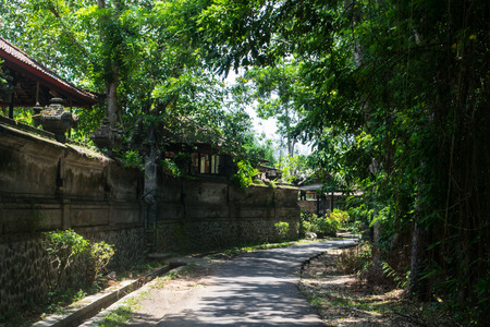 bali province: Exotic hiking in the middle of the forest in Bali