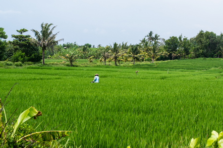 bali province: Amazing lush green plants in the island Bali