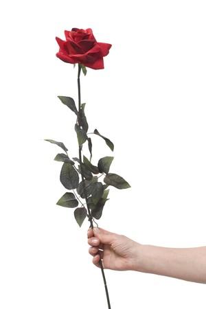 mano sosteniendo una rosa roja  Foto de archivo - 7608699