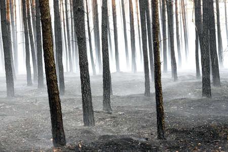 quemado: Forestal quemada tras un incendio