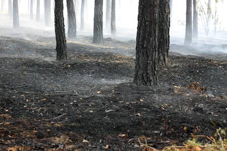 Burned forest after fire Stock Photo