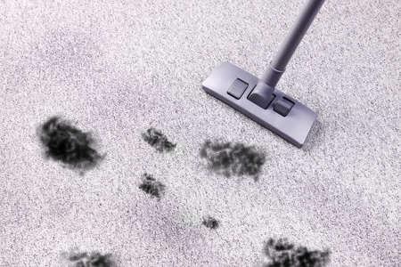 saprophyte: Very dirty floor