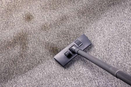 saprophyte: Vacuuming flor